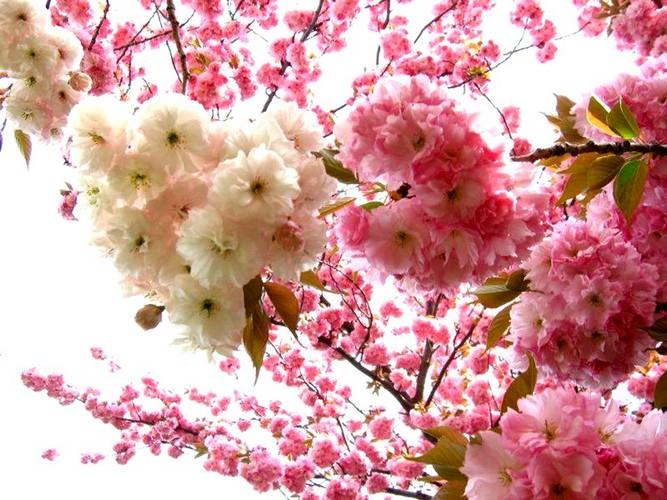 beautiful spring
