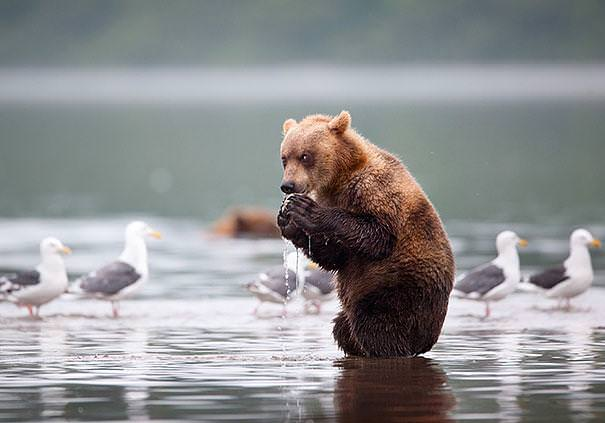 Bears Like Humans