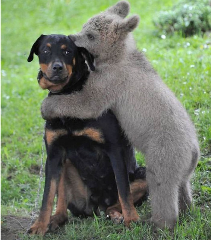 hugging animals