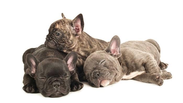 puppies at 6 weeks