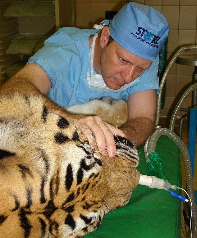 big game dentist