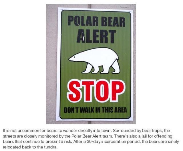 polar bear capital