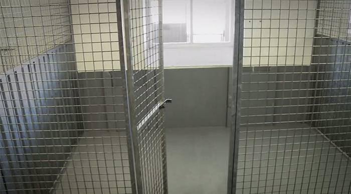 bulldog special kennel