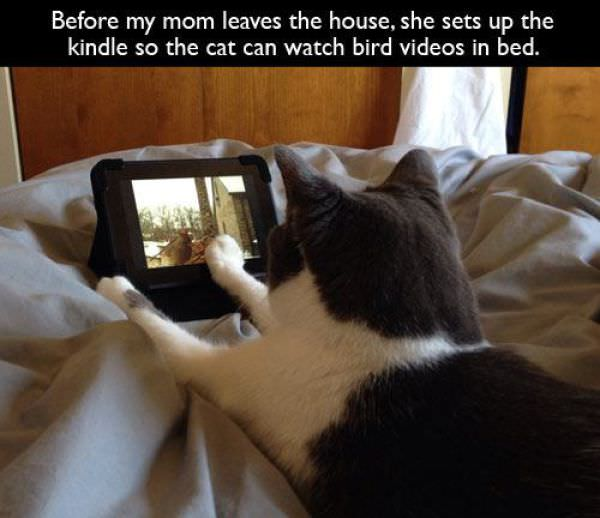 pets treated well
