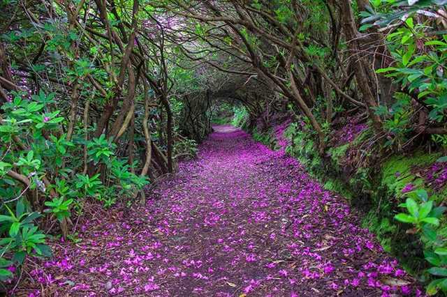 beautiful paths to walk