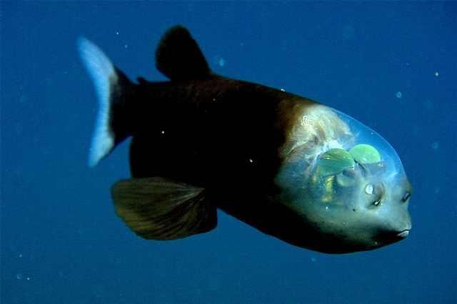 weird sea creatures animals