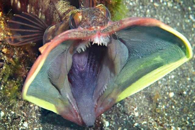 Weird Looking Ocean Fish 2