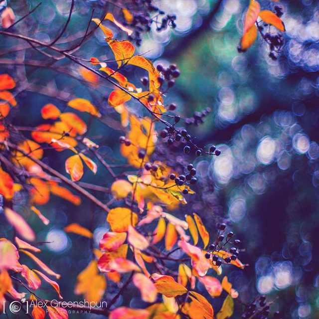 fall photos autumn