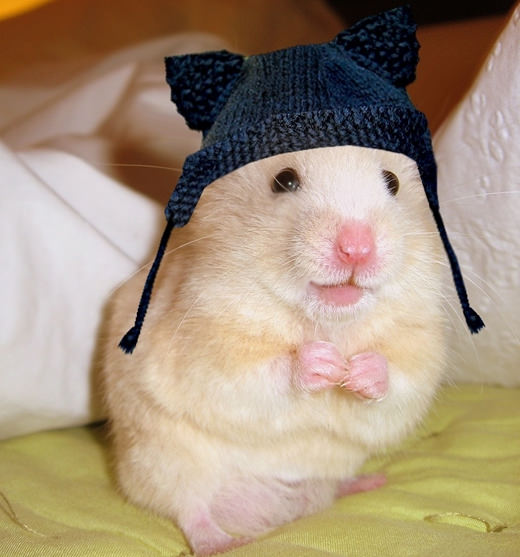 Hamsters are just so cute