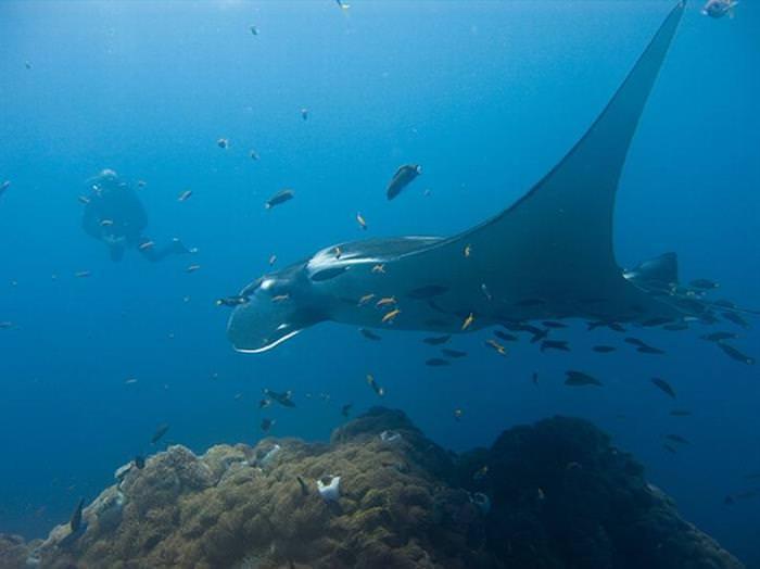 18 Giant Creatures that Lurk Underwater