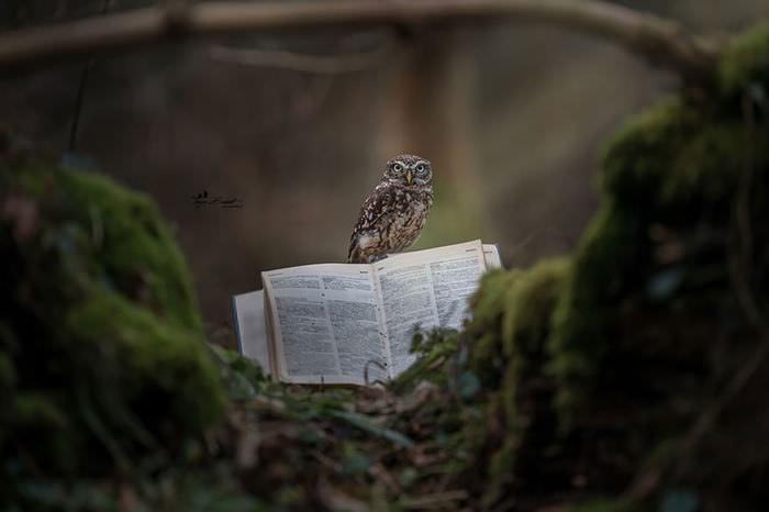 tiny owls