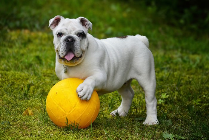 Doggie ABC