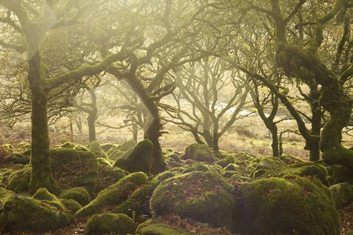 beautiful places in the UK Wistman's Wood, Dartmoor