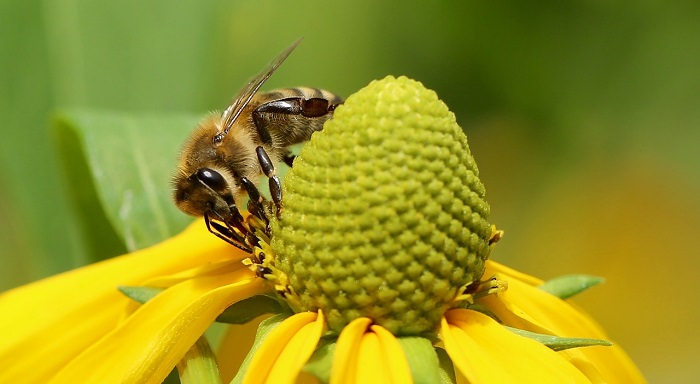 Household Injuries: closeup of a bee on a flower