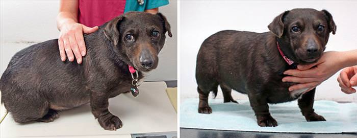 These Chubby Dogs and Cats Shed Some Serious Weight...