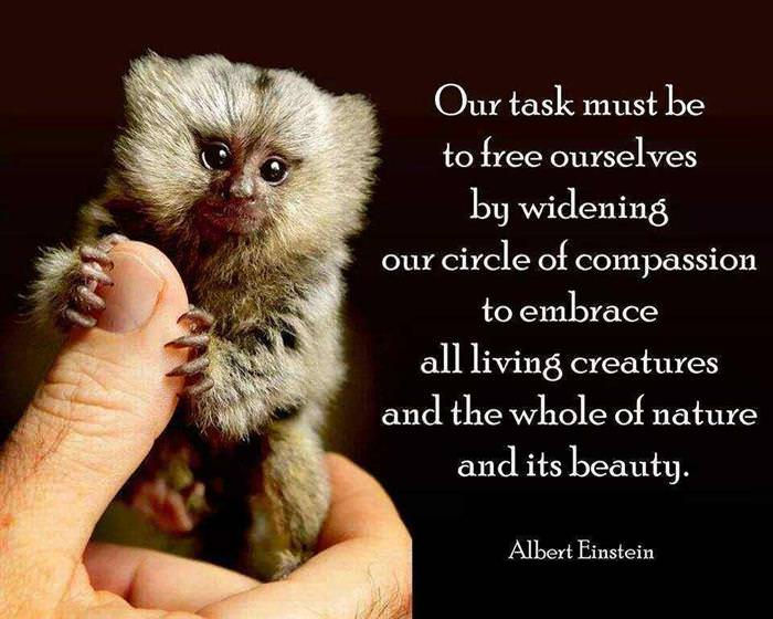 Quotes by Albert Einstein - Our task must be to free ourselves by widening our circle of compassion to embrace all living creatures and the whole of nature and its beauty.