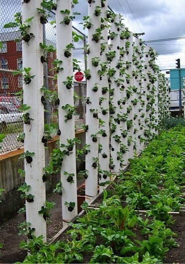 Innovative Ways To Create A Vertical Garden