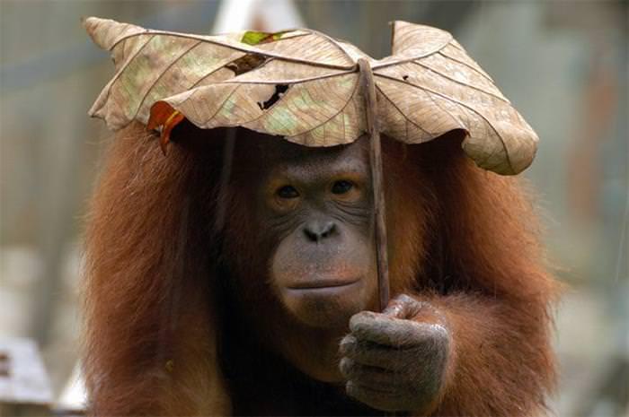 natural umbrelllas