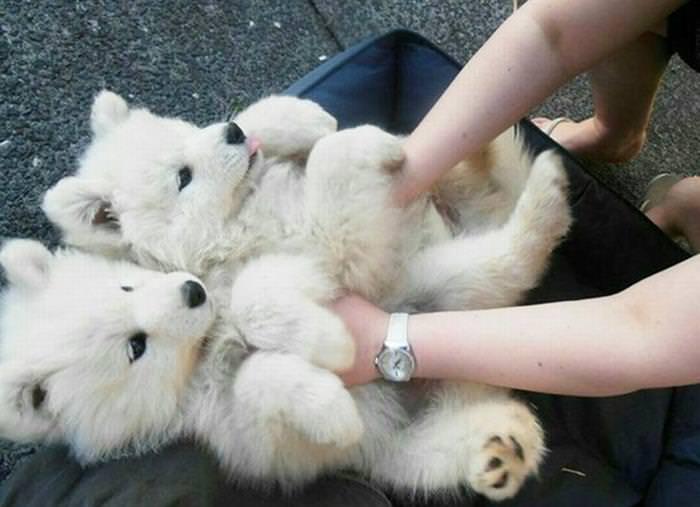 Belly rub animals