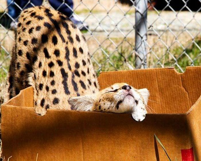 cute dangerous animals