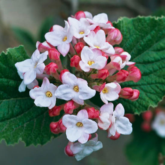 The Most Beautiful Spring-Flowing Shrubs