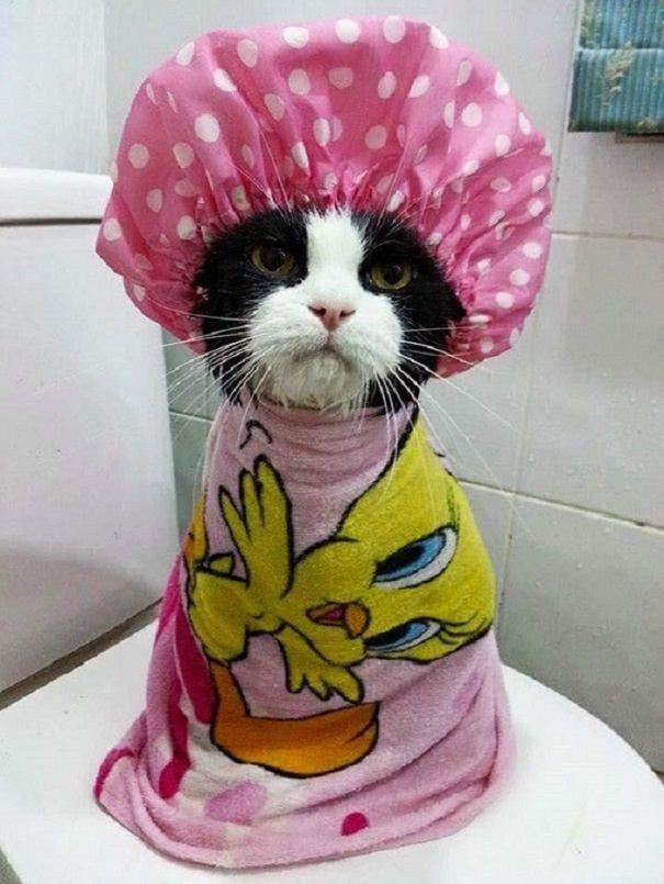 animal bath time