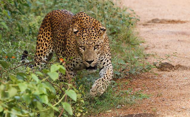 24 Reasons to Visit Spectacular Sri Lanka