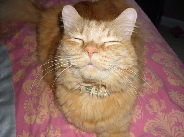 smiling cats