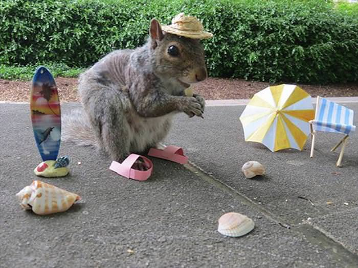 This Cute Squirrel Stole the Hearts of Many