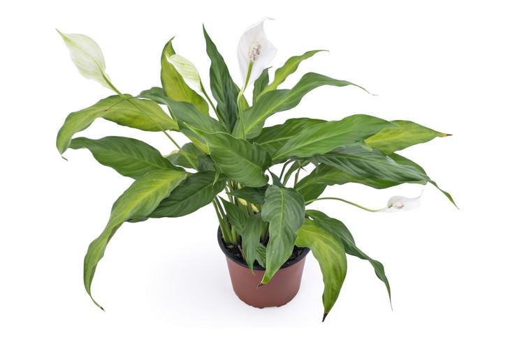 plants, house, environment, health