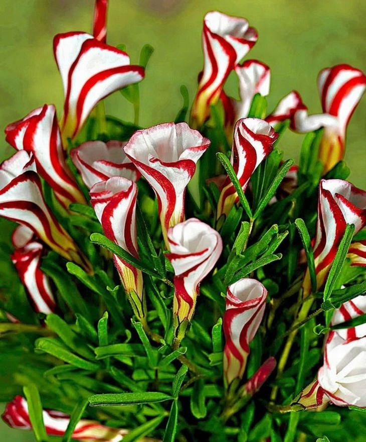 Some Rare Unusual And Beautiful Flower Species