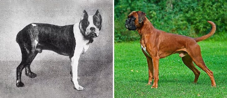 Dogs - Changed - Past Century