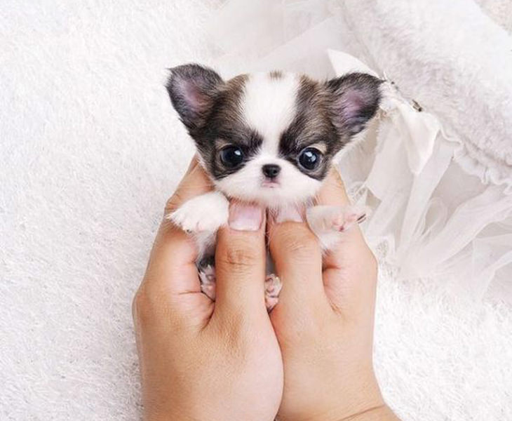 23 Of The Cutest Puppy Pics Ever