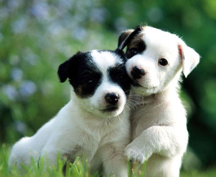 Cute puppy pics for whatsapp dp