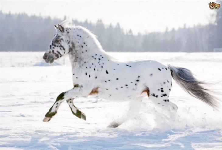 Horses - Flowing Hair - Beautiful
