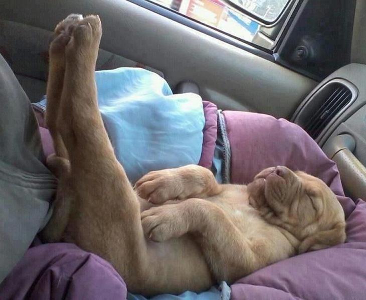 dogs-sleeping