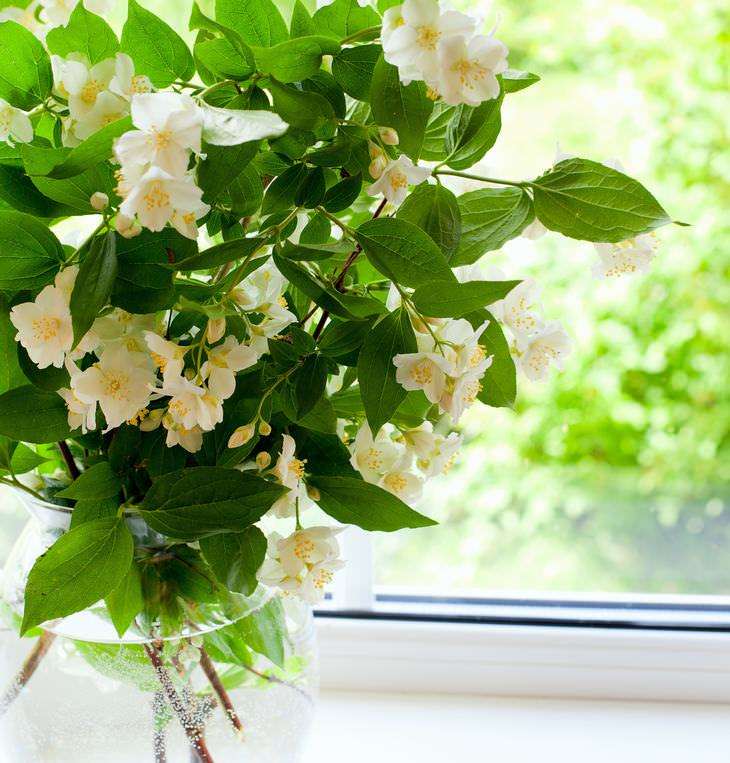 scented flowers