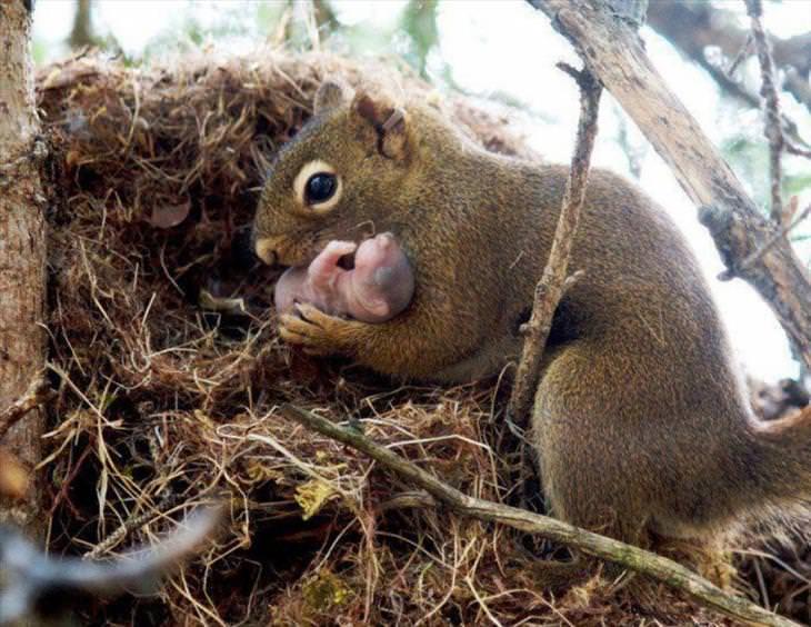 Mother & Baby Animals