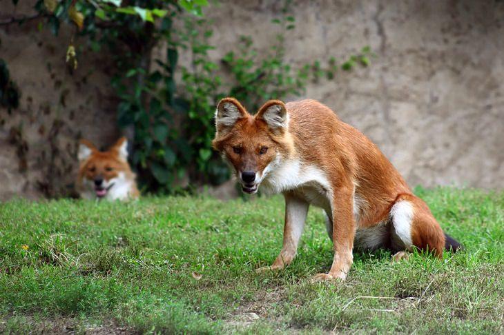 Weird - Animals - Photos