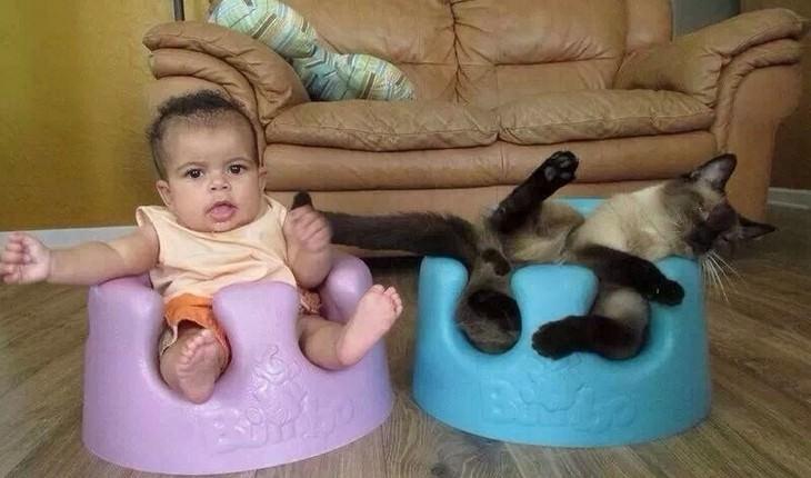 animals, sitting, tight, funny, cute