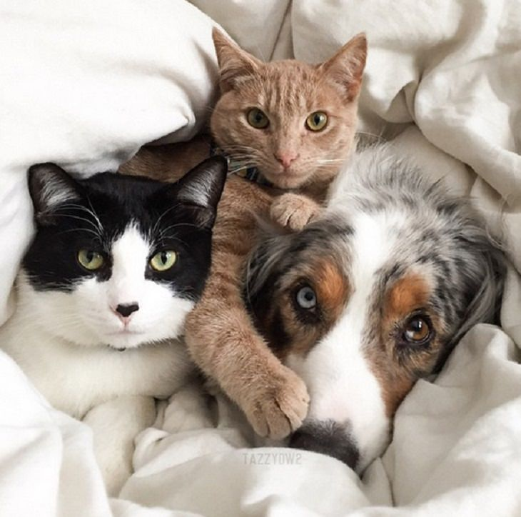 Cats - Dogs - Cute - Photos - Friendship