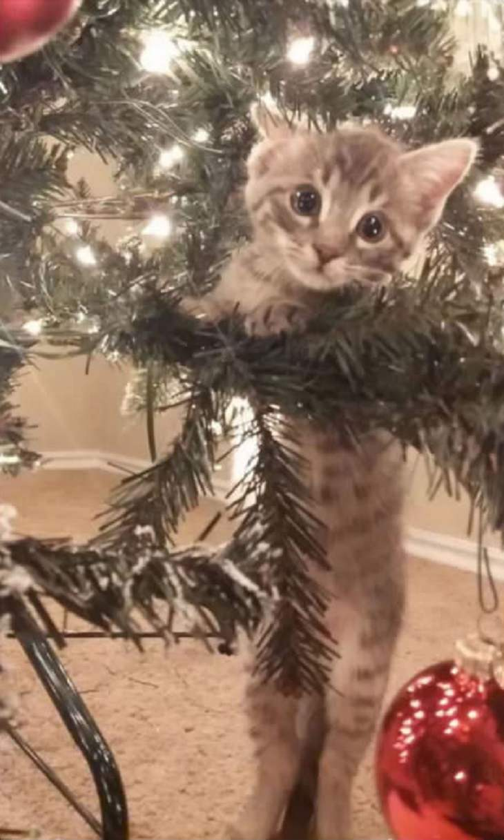 Cats - Christmas - Excited