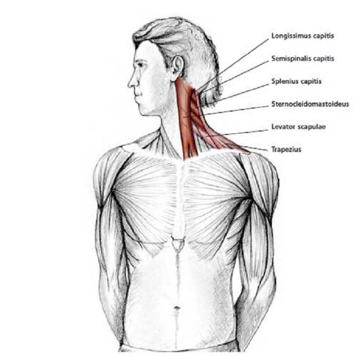 Hombro y cuello de izquierdo espalda dolor