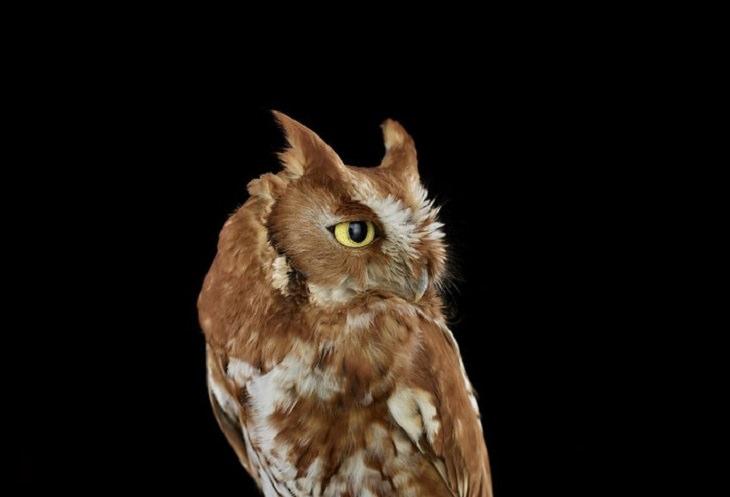 Owls - Impressive - Photography