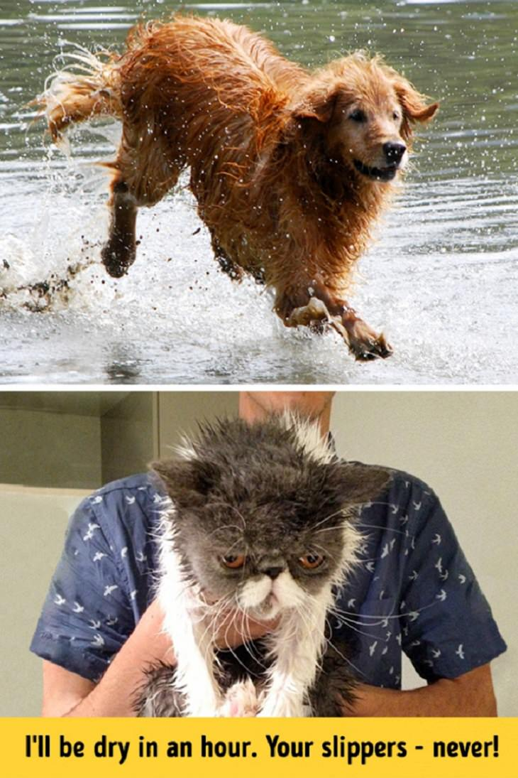 Cats - Dogs - Differences