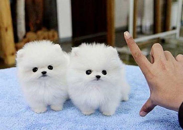 Puppies - Brighten - Day