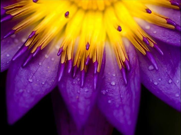Rain - Beauty - Flower - Nature