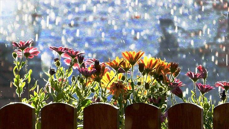 flowers are more beautiful after rain nature