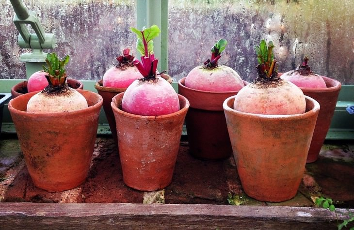 vegetables you can grow in a pot