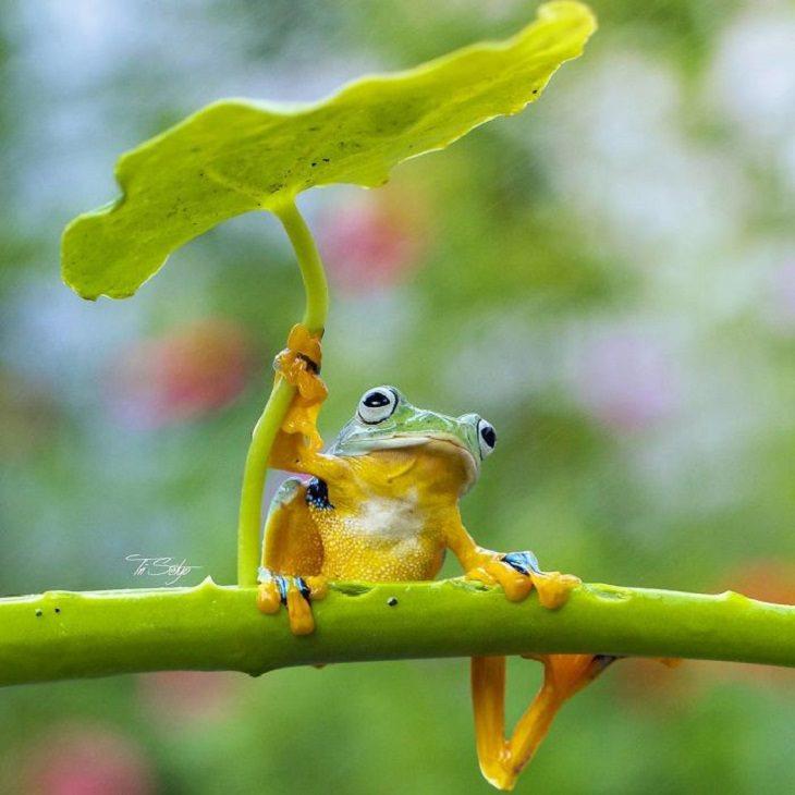 Stunning - Macro - Photography - Tiny Creatures